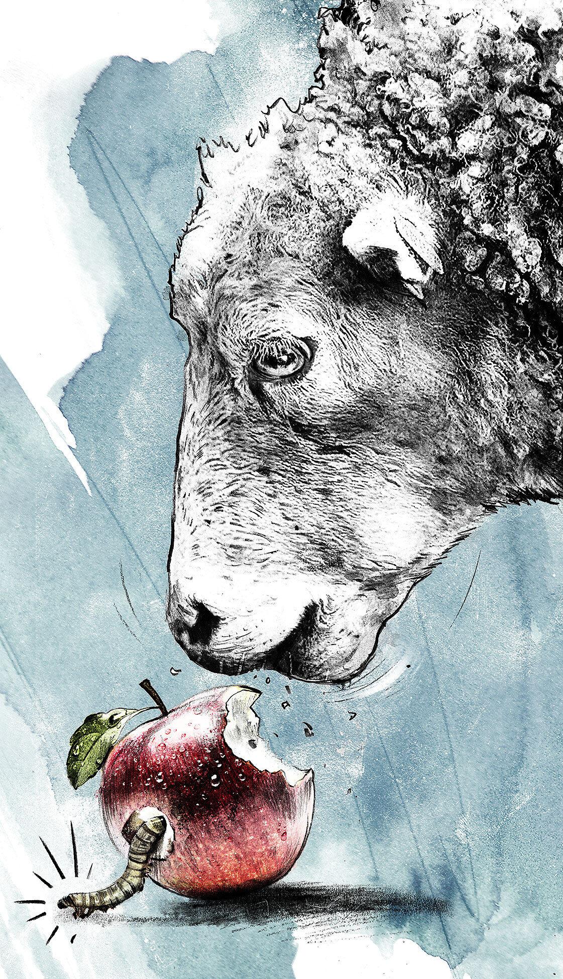 SVP schaeflein wurm apfel - Kornel Illustration | Kornel Stadler portfolio