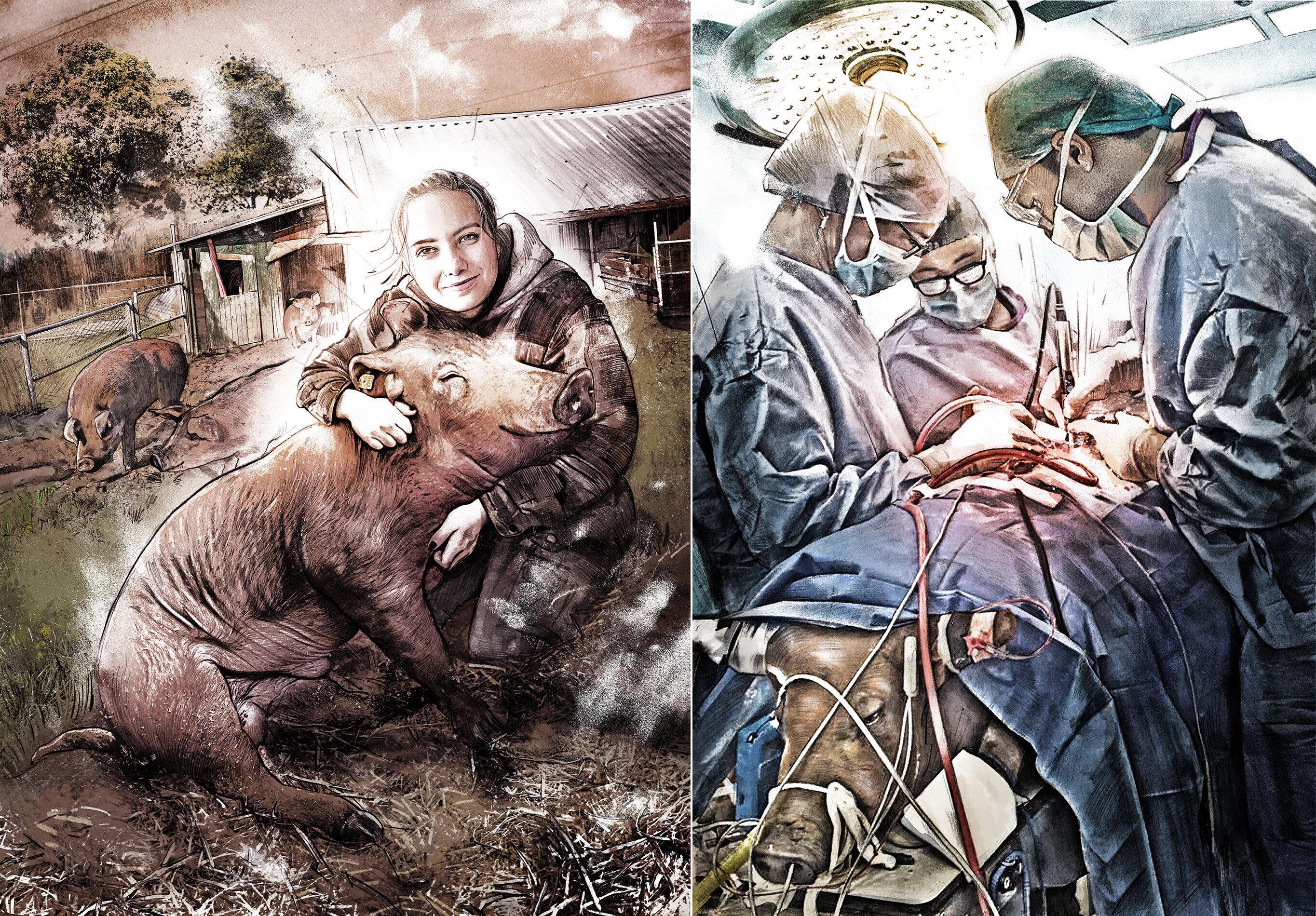 Piggy - Kornel Illustration   Kornel Stadler portfolio